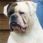 Johnson American Bulldogs - Elroy