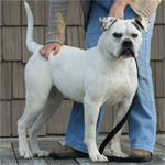 Johnson American Bulldogs - Georgia