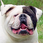 Johnson American Bulldogs - John D.