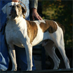Johnson American Bulldogs - Rebel Rousier 01