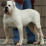 Johnson American Bulldogs - Rebel Rousier 500